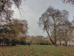 Park picture with soft mist preset
