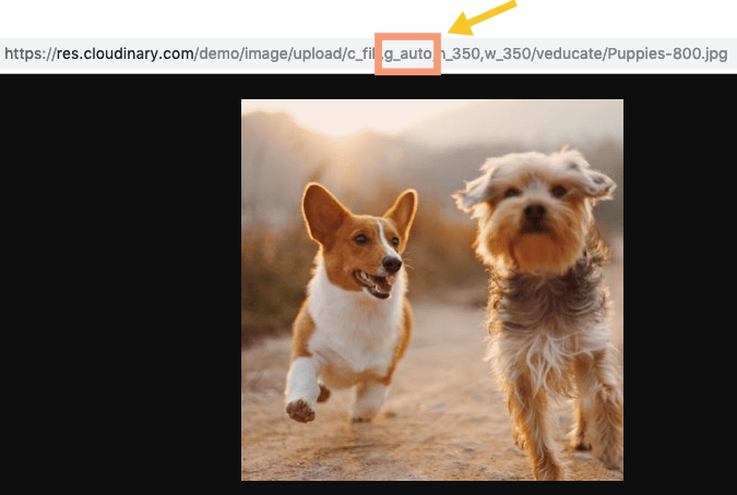 Example of Cloudinary g_auto Transformation Applied to Image of Dogs Running