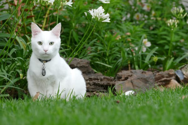 A white cat, off-center