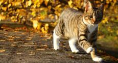 Cat image - original