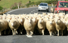 Sheep image delivered as a PNG