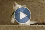 https://res.cloudinary.com/demo/image/upload/w_150,h_100,c_fill,g_north/l_play_button,w_0.4,fl_relative,o_60/kitten_fighting.jpg