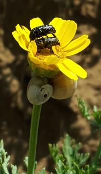 Bugs in a flower photo - Original