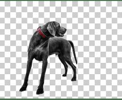 Dog on sand - no background