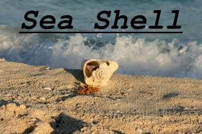 """Photo Overlaid With Caption """"Sea Shell"""" in Courier Font , Boldfaced, Italicized, and Underlined"""