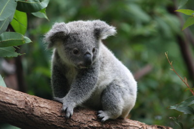 Koala uploaded image for auto tagging
