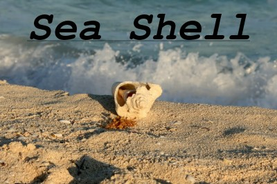 Sea shell photo with Courier bold, italic and underline text overlay