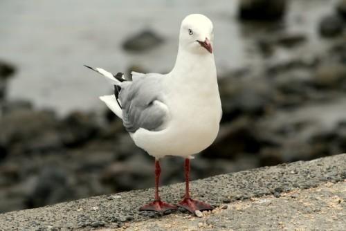 Seagull JPEG