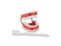 Study Model Toothbrushing (incl. super-brush) img