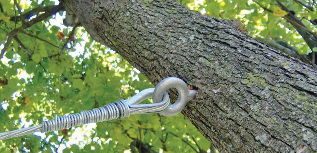 support screw in a tree trunk