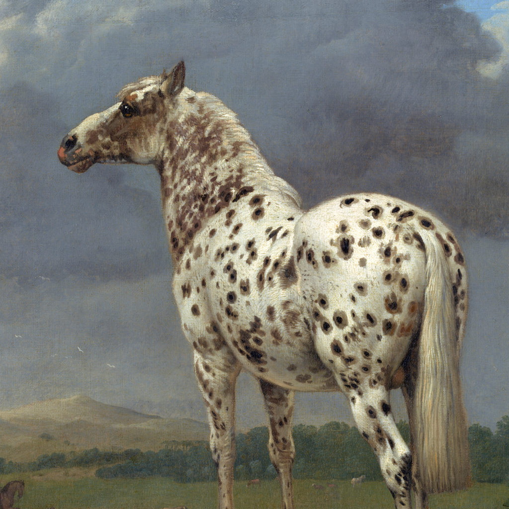 """The """"Piebald"""" Horse by undefined"""