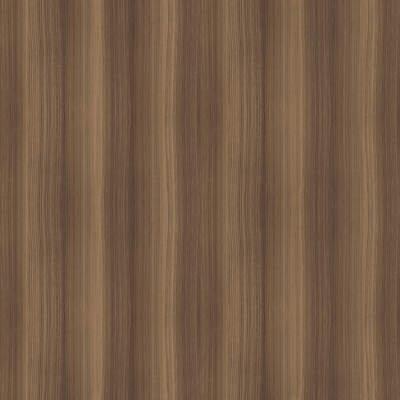 Eucalyptus 13