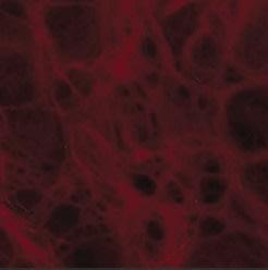 Rosso Pompei