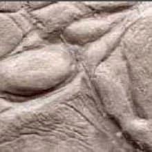 Pelle di Coccodrillo A