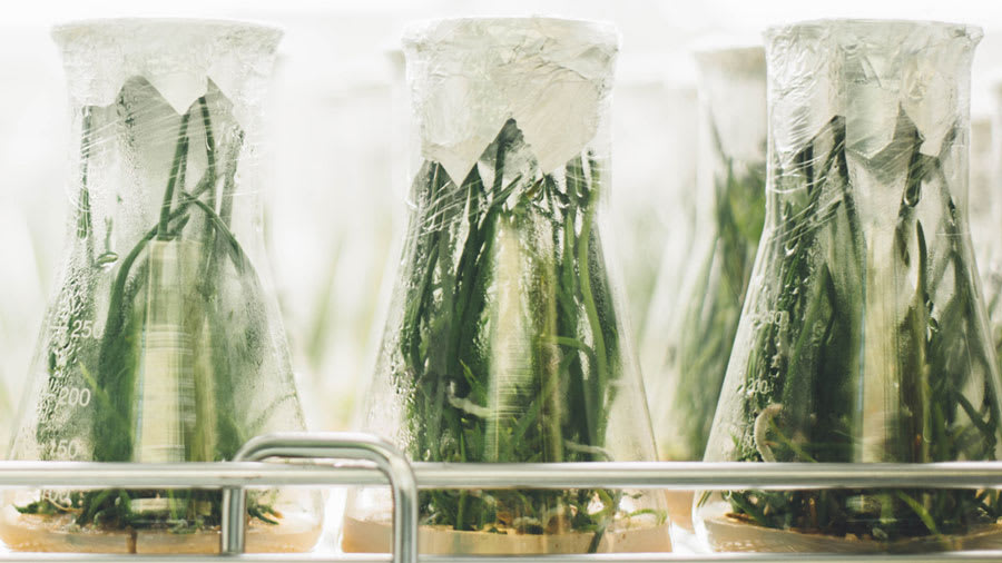 Green plants sprouting in experimental glass flasks