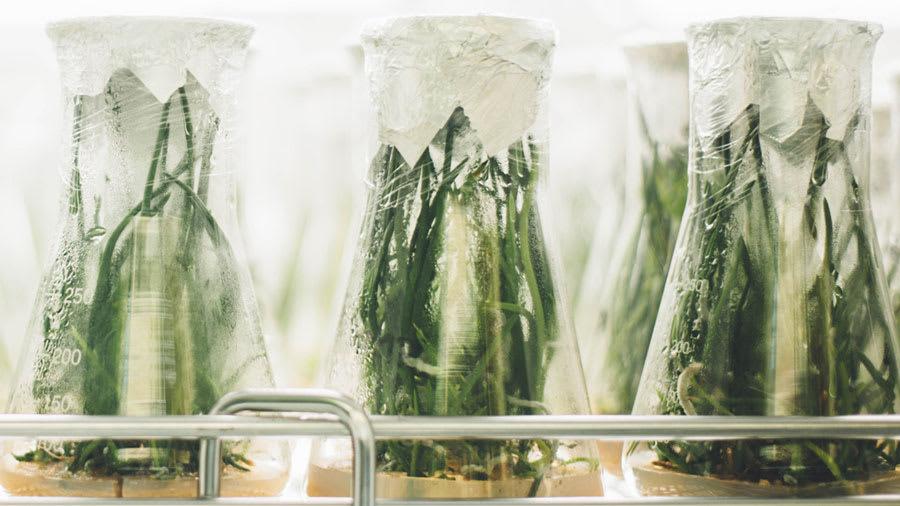 Skin Savvy Botanicals Extracts