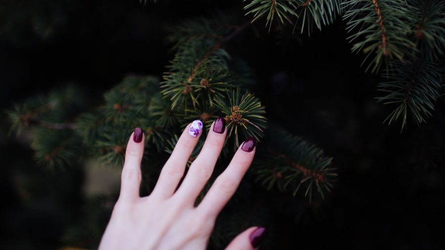 woman's hand with purple painted nails touching pine tree