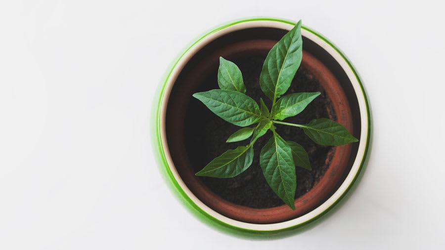 green house plant for heart chakra energy