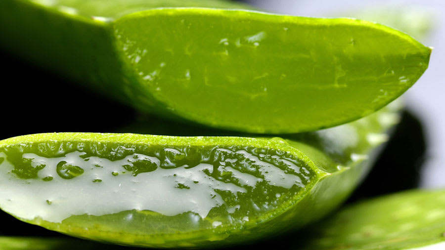 Skingredient: Aloe Vera is Nature's Skin Soother