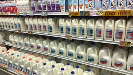 Gallons of milk in the dairy ailse