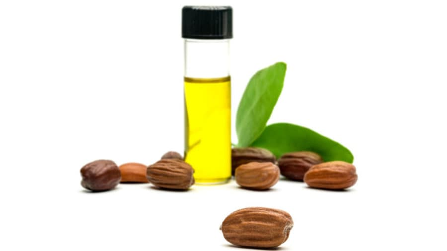 Jojoba nuts scattered around jojoba oil