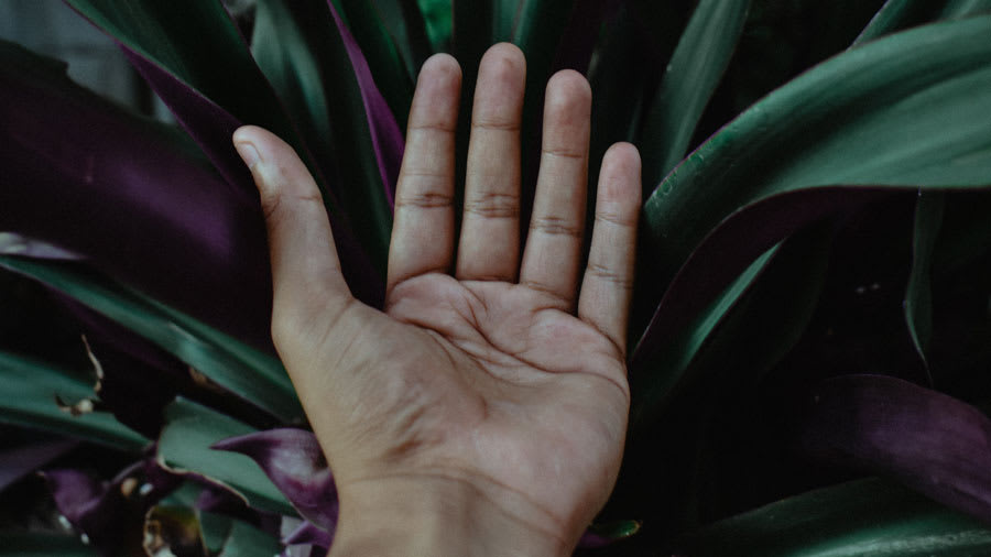 Clean hand in front of plant