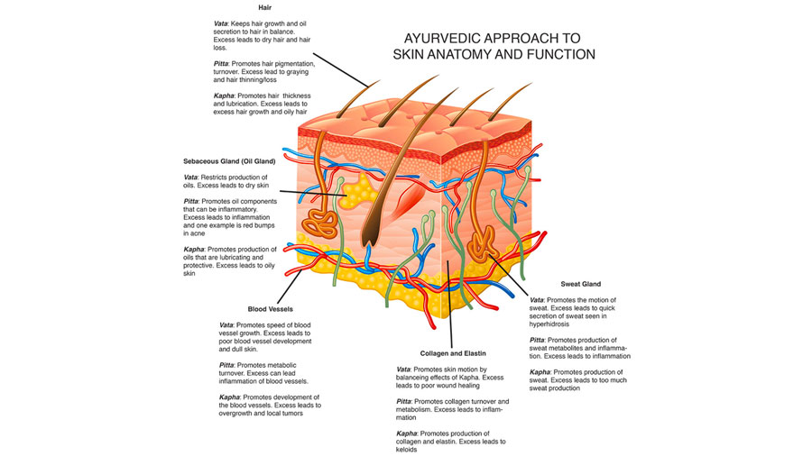 Ayurvedic Medicine Primer