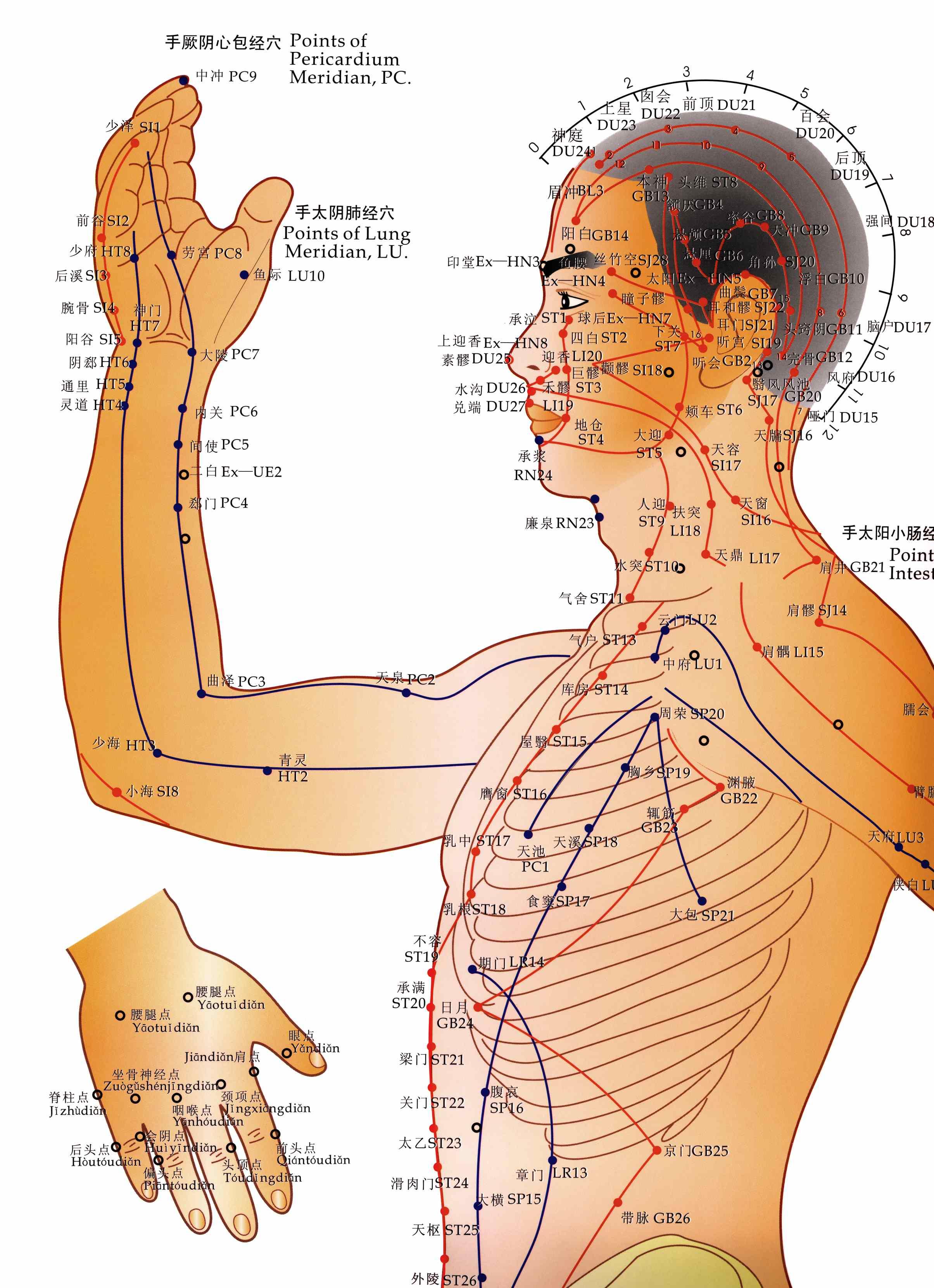Resultado de imagem para acupuncture meridians