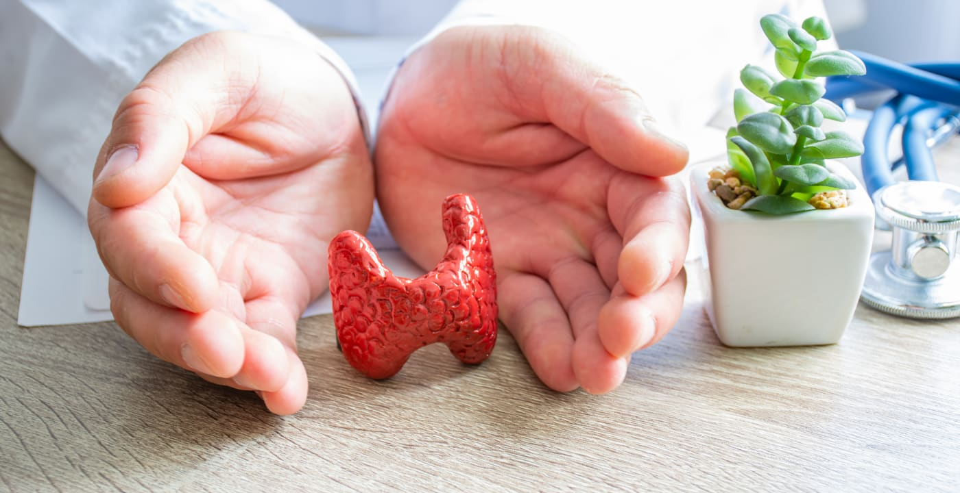 Hands learn a model of an organ