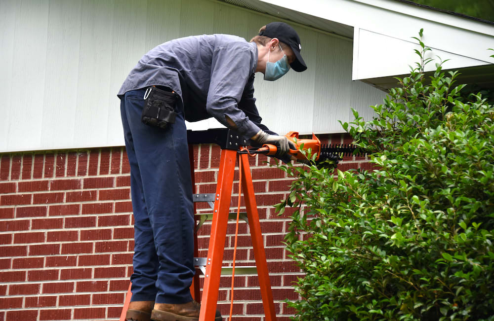 Man wearing a mask on a ladder clipping a tree back