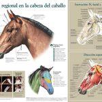Infografias de Animales