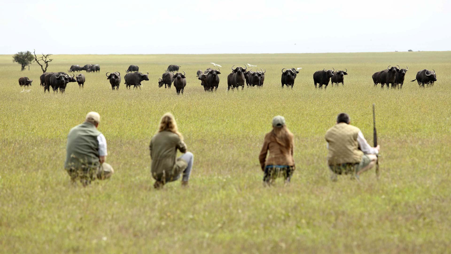 Viewing Buffalo