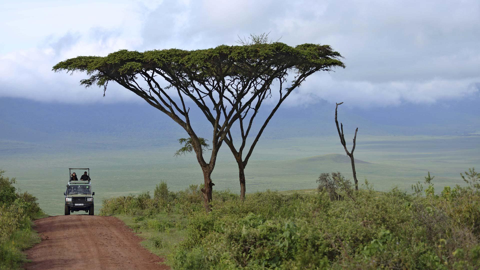 Ngorongoro Crater ascent road