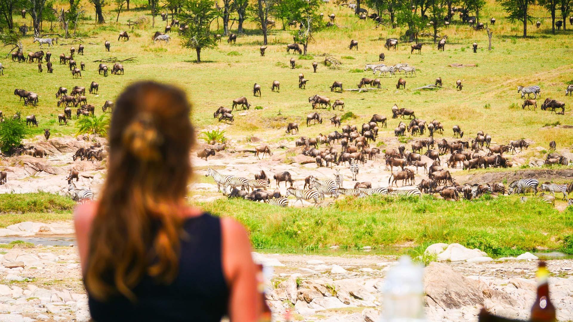 Wildebeest herds near camp