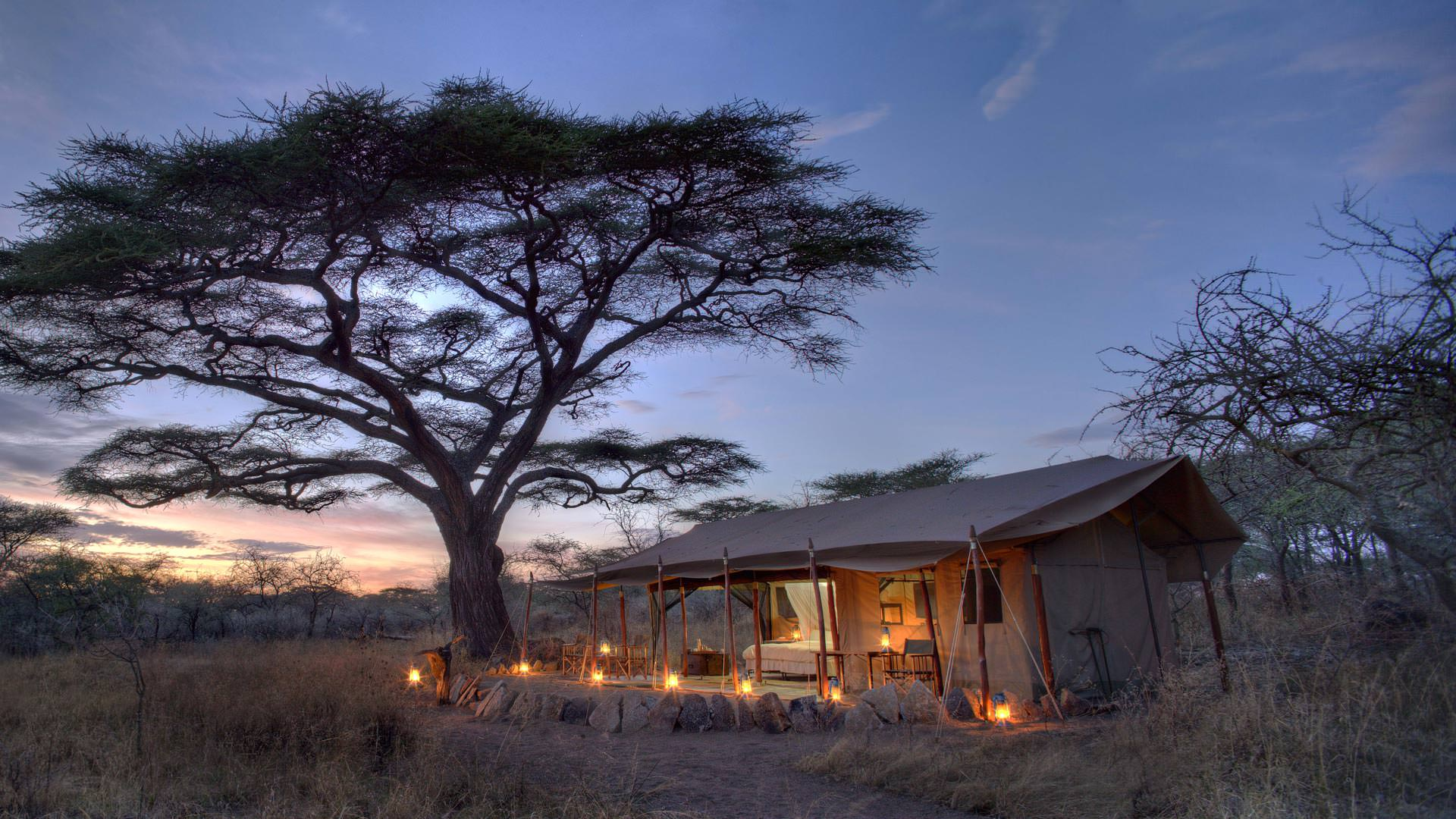 Mbono guest tent at dusk
