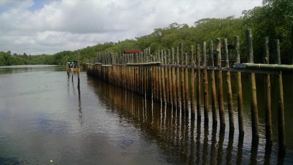 Visita ao santuário dos peixes-bois