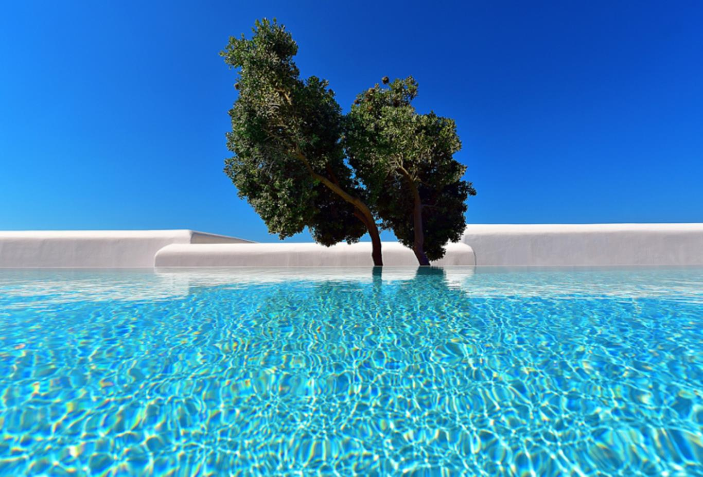 Premium Garden Sharing Pool tree