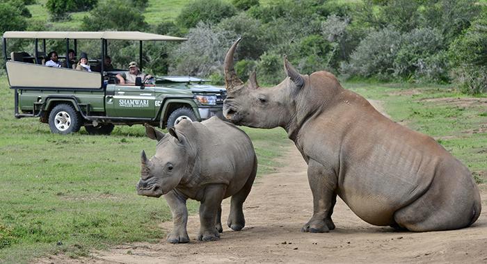 Lazy rhinos