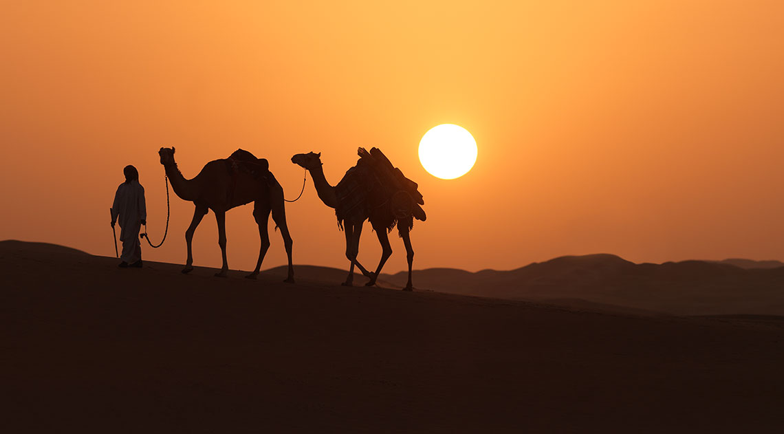 Two camels against the sunset in the desert