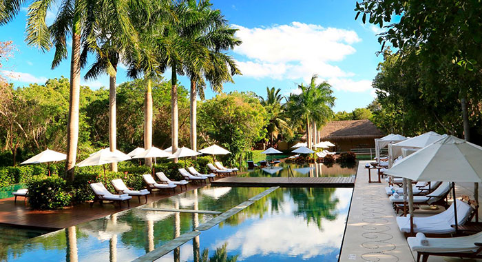 Swimming pool and sun loungers surrounded by palm trees and greenery