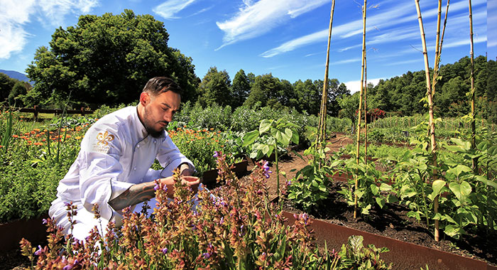 Chef picking herbs from organic garden