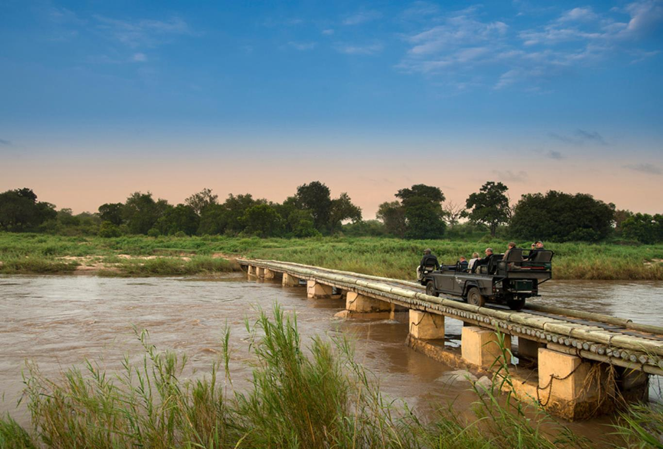 Safari Bridge