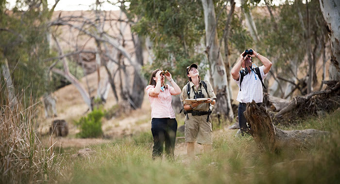 Couple looking up with binoculars along with a tour guide