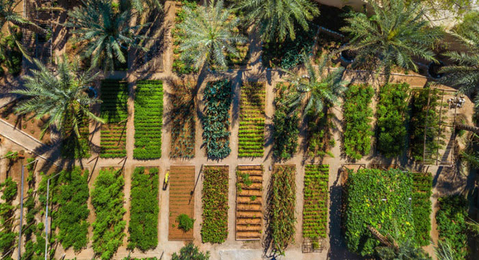 Aerial view of garden patches growing fresh herbs
