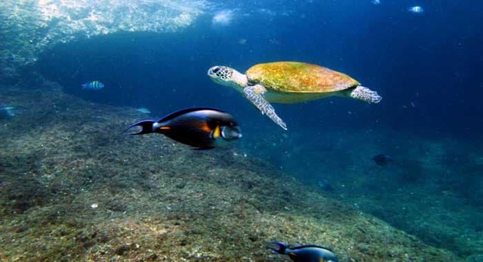 Turtle at Six Senses Zighy Bay