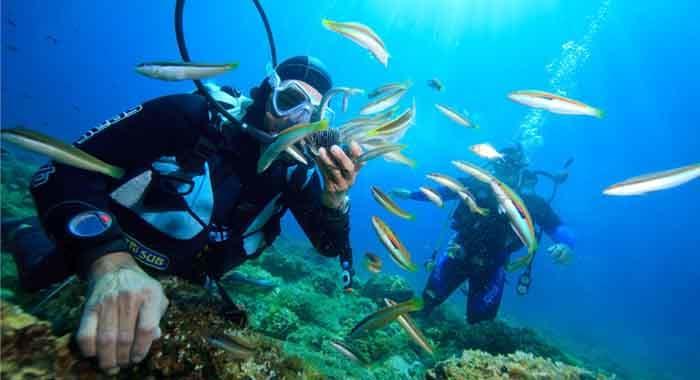 Diving in Rovinj