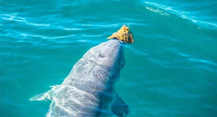 Dolphins Monkey Mia