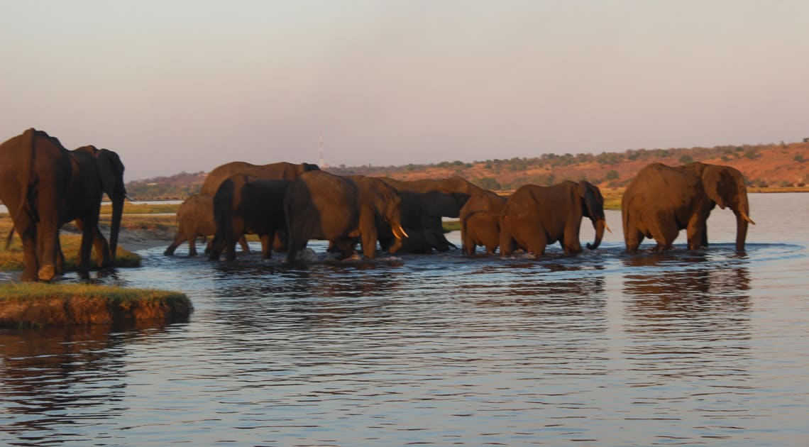 Elephants at river crossing