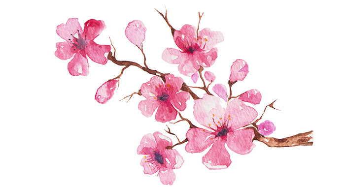 Cherry blossom paintin