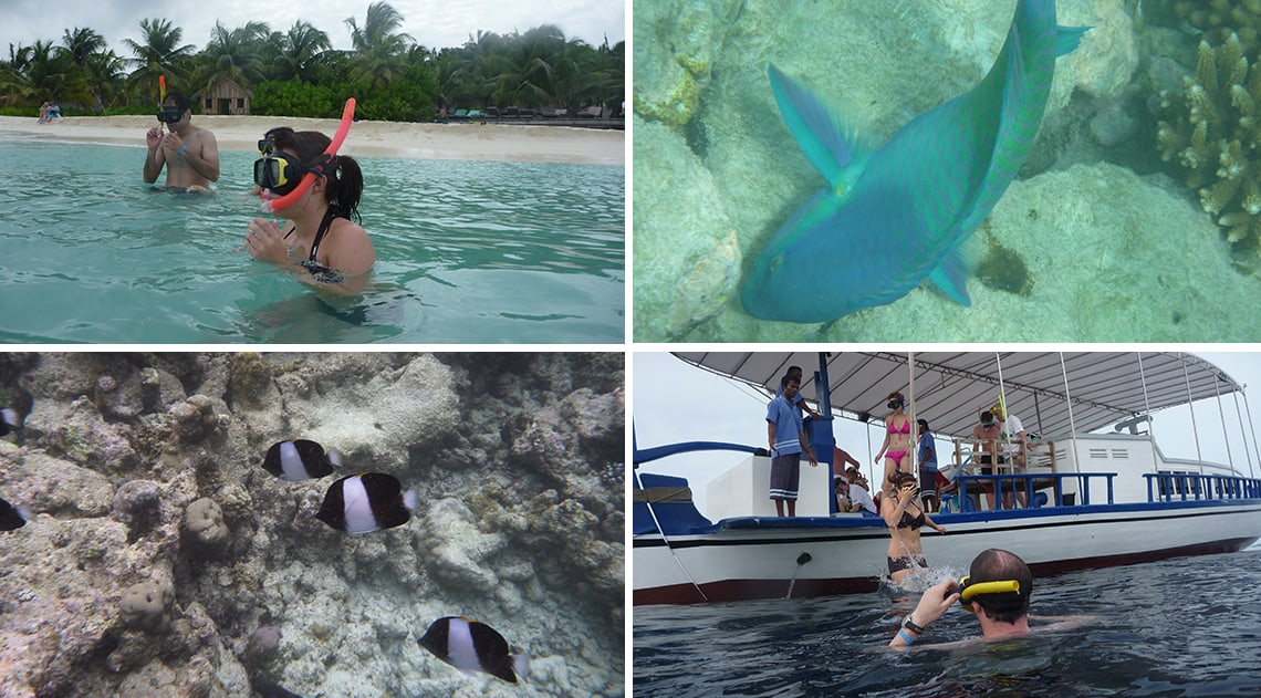 Snorkelling in the Maldives and sealife